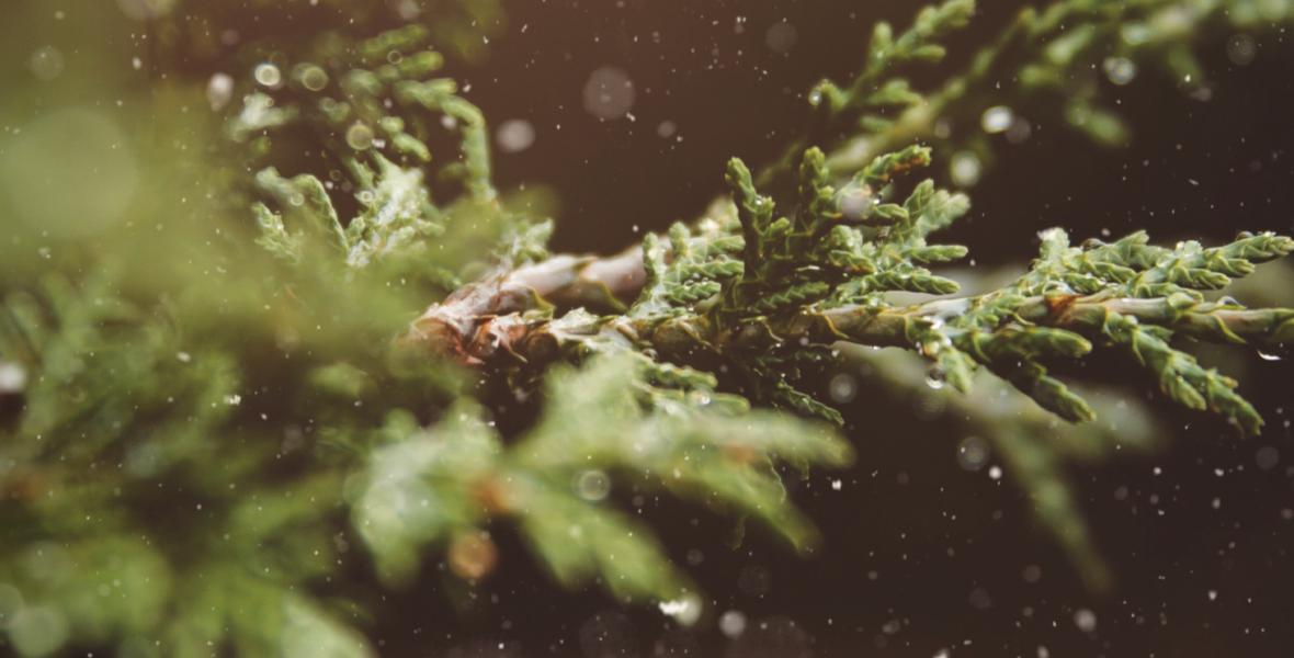 Copertina Bollettino Natale Amri